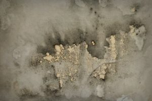 Mold Damage - Testing and Removal